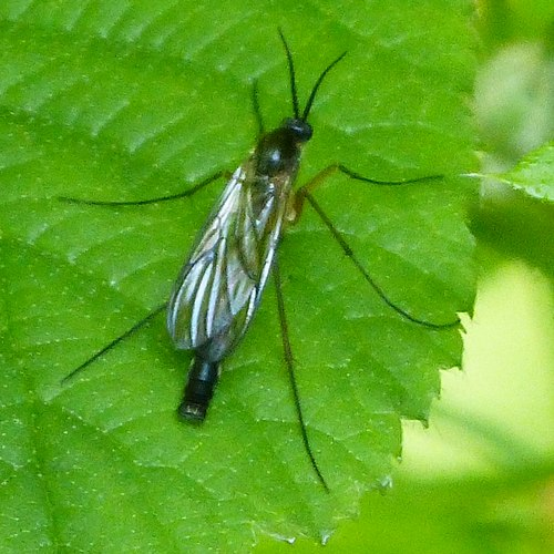 How To Get Rid Of Fungus Gnats On Houseplants